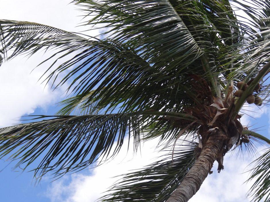 Caraibisch Uitzicht - Aart G. Broek - palmboom