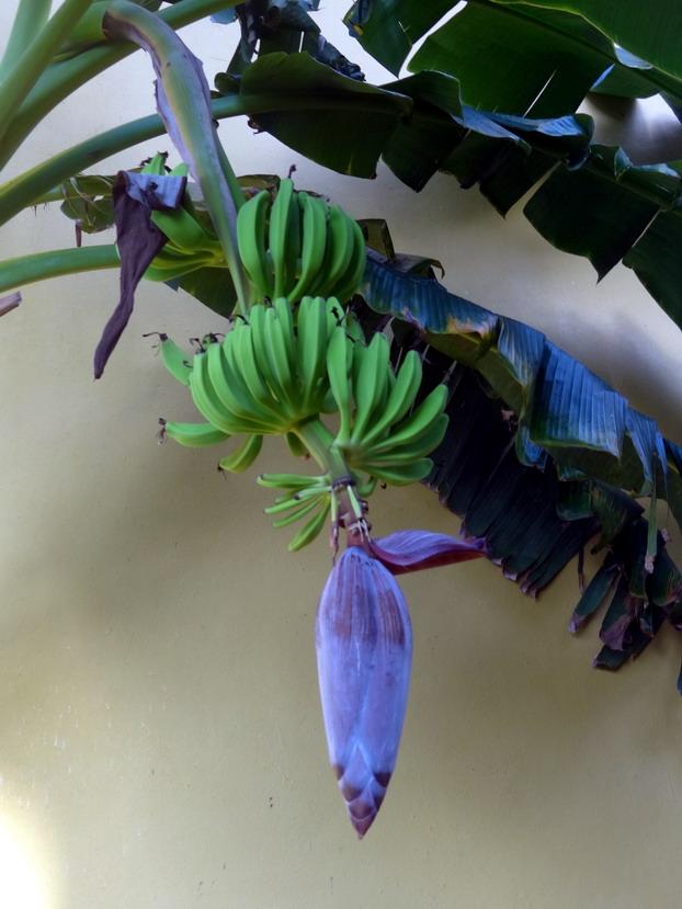 go bananas : go nuts / photo Aart G. Broek